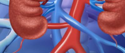 Ureum nieren